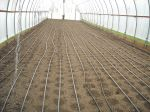 High Tunnel, New Mesclun