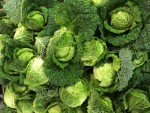 Savoy Cabbage