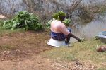 Ghanaian Woman washing Greens
