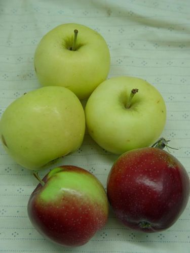 Earliest Apples--Pristine above, Williams Pride below