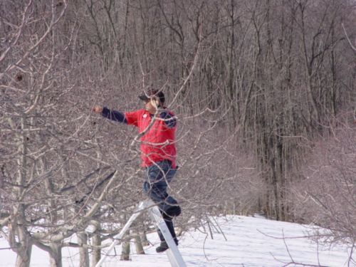 Pruning in the Snow!