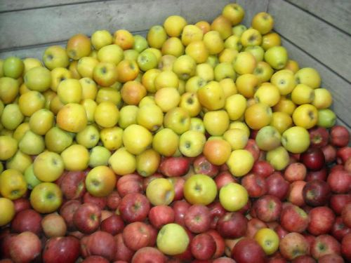Mixed apple bin
