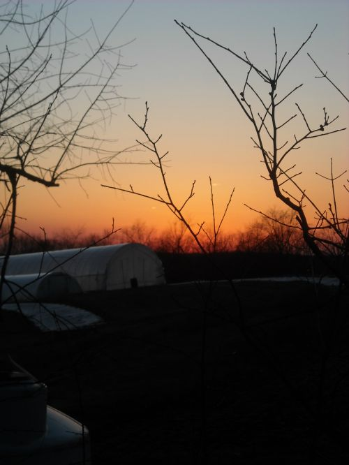 Pruning Day Sunset
