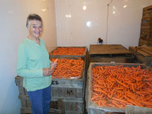 Ton of Carrots