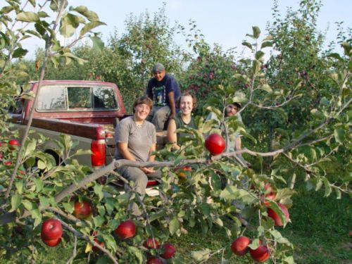 Crew in Apples