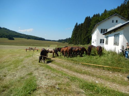 Slovak Horse Breeding