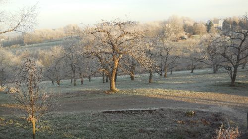 December Morning Hoarfrost
