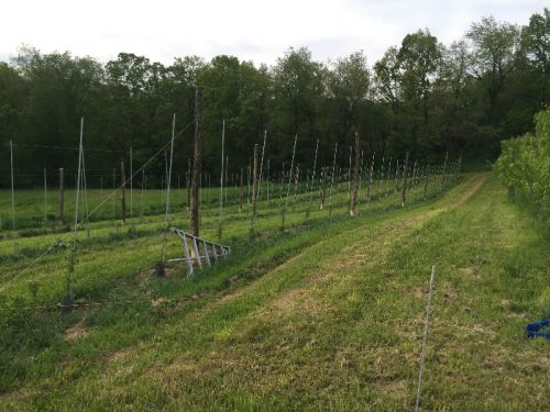 New Orchard Planting