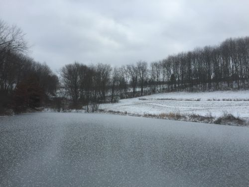 Frozen Pond in January