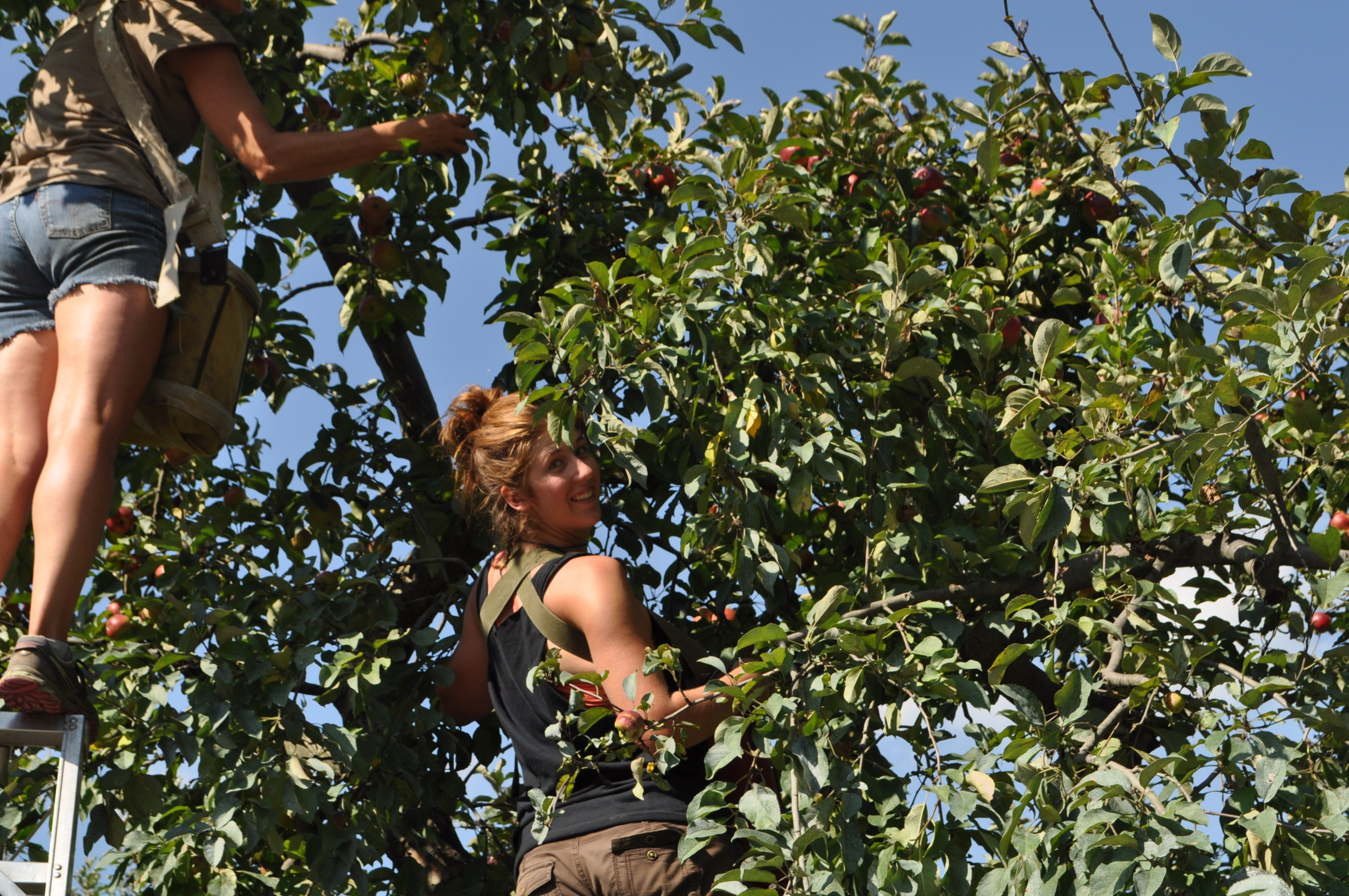 Gwen, Maria picking apples