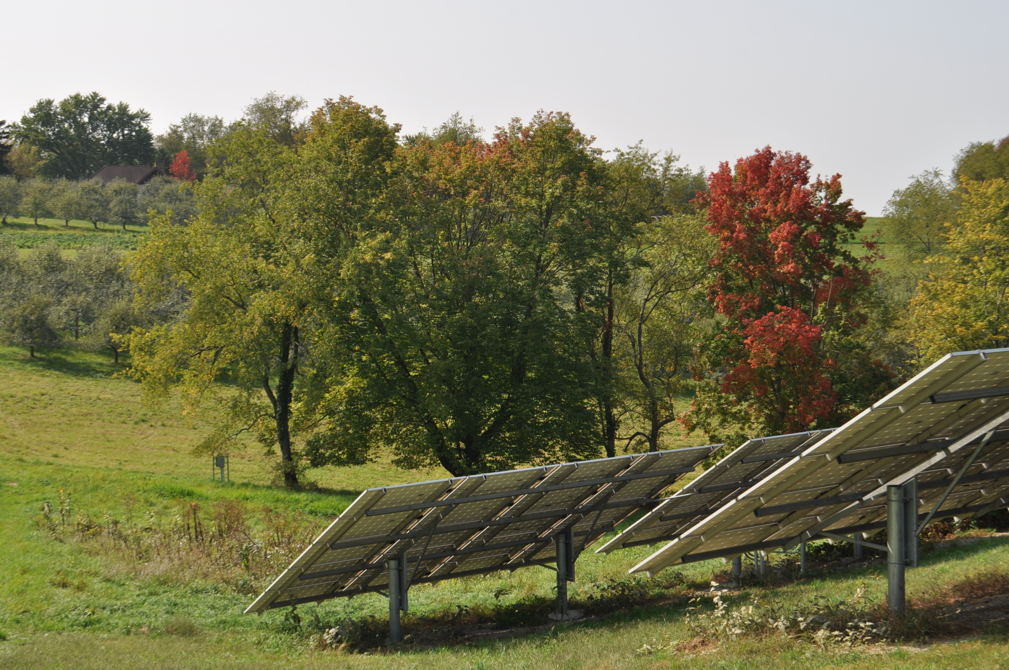 Solar panels with coming fall color