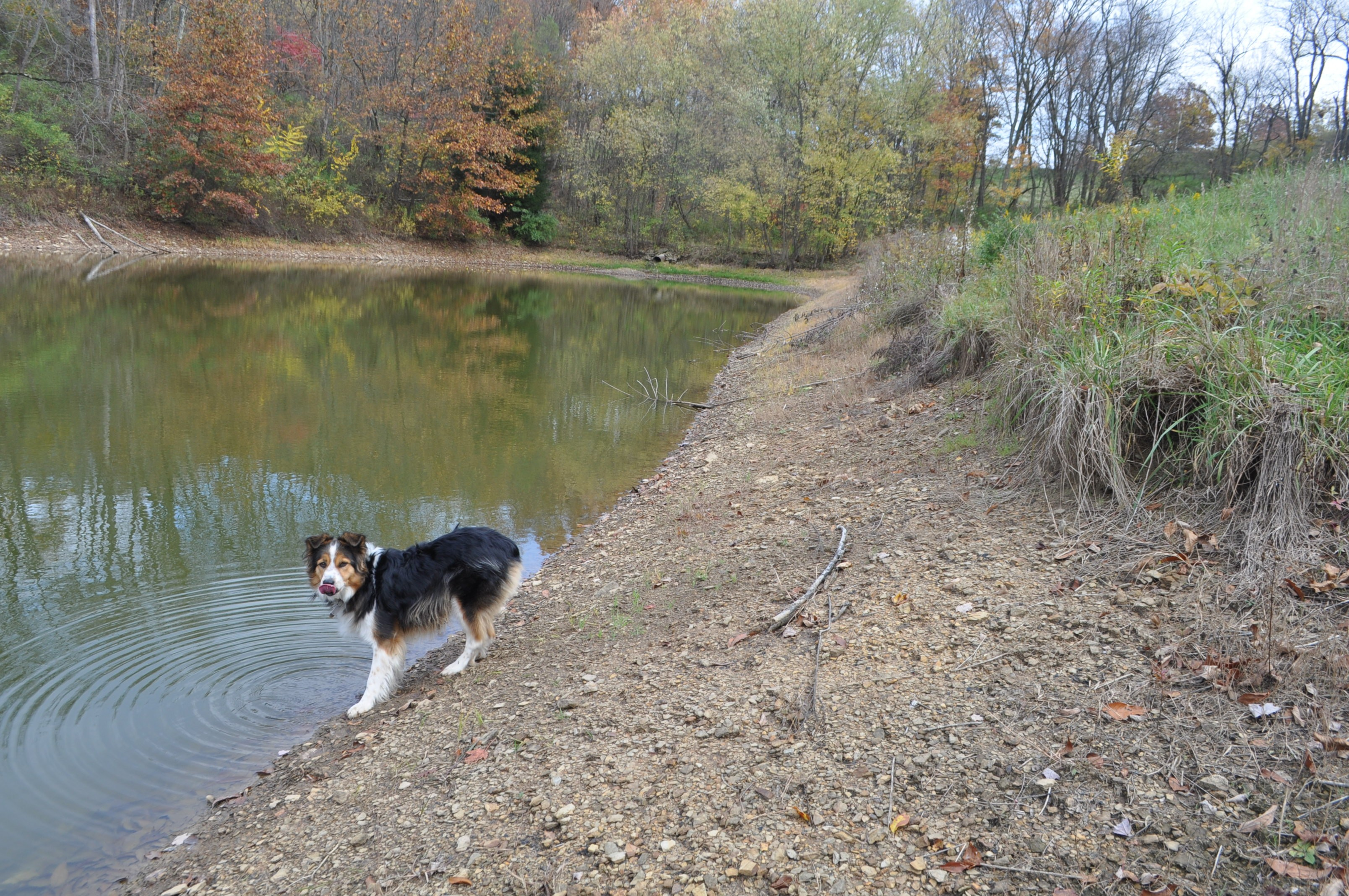 Low pond in fall; Molly