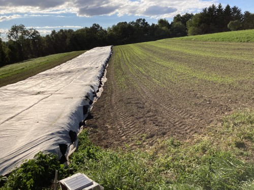 Row cover over the beans