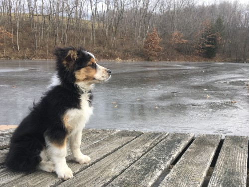 Molly by Pond