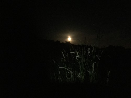 June Moonrise