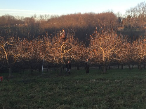 Late day pruners