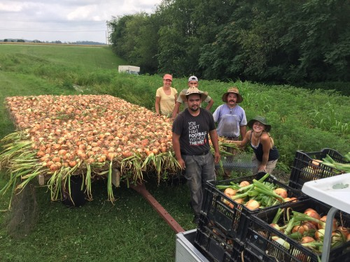 Crew with wagon load of Onions