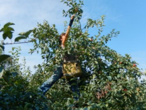 Maria Reaching for Apples
