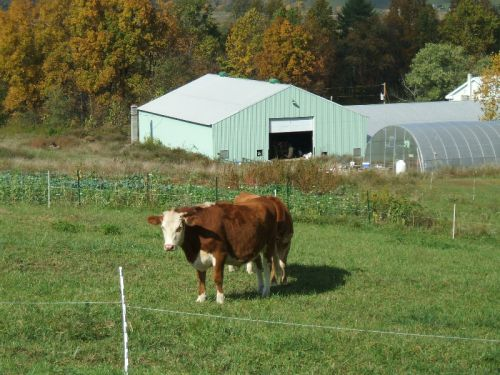 Scenic Jade Family Farm with Hereford