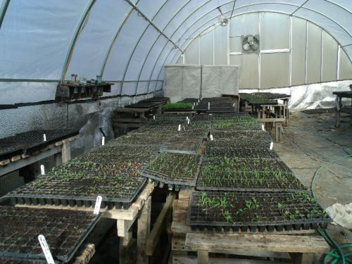 the greenhouse in mid February