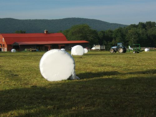 Haylage bales