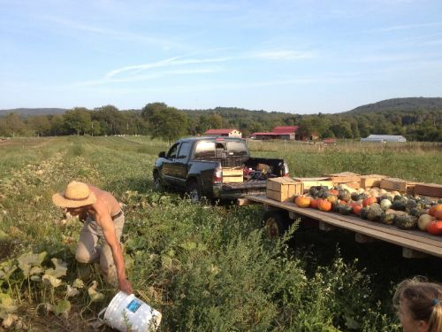 Paul harvesting winter squash