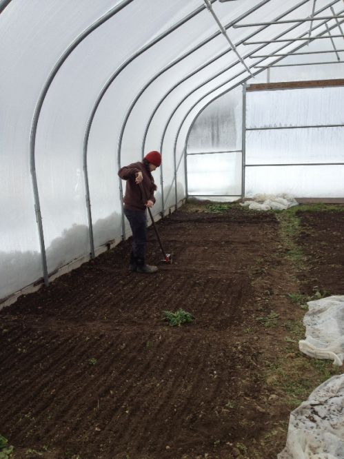 Seeding in the hoophouse