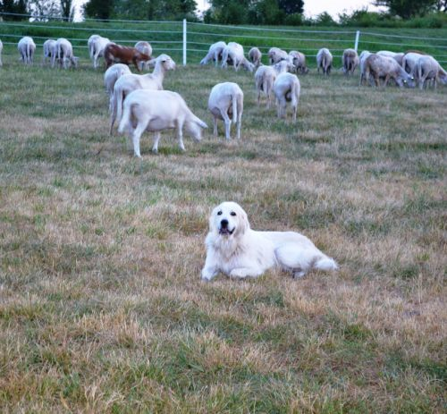 Mary watching her flock