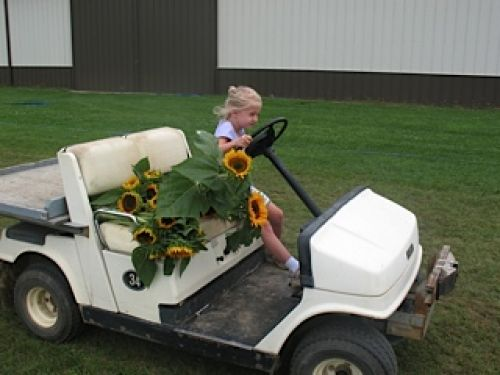 Lauren on her way to the farm stand with some fresh cut sunflowers