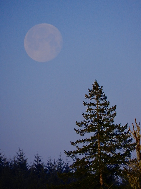 Full moon fever at dawn looking west over the pastures and trees.