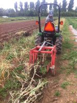 Bob's garlic harvester saved us so much time and work!