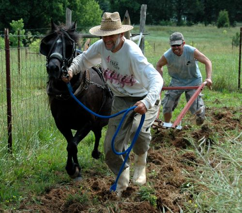 """Farmer Leaf leads our new fast-stepping pony """"Blackie,"""" as son Hawk guides the plow in the east garden. (Spring-2010)"""