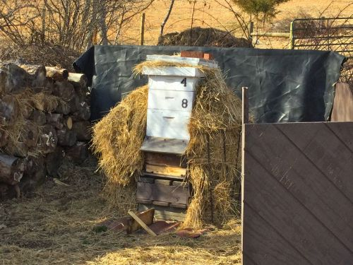 VA FARM, beehive with a 3 sided hay covering to protect the hive from normal cold winter weather. The hive faces south, and the wind barriers create a warmer micro-climate around the hive.