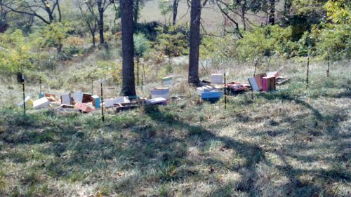 Bear Destroyed Bee Hives