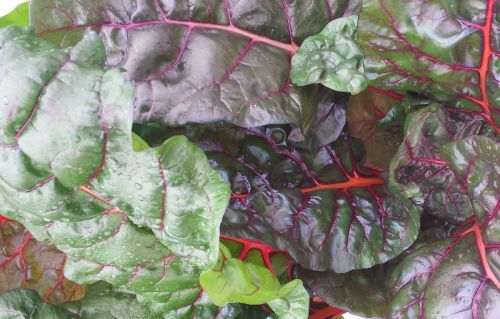 Tender Swiss Chard