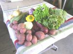 Early July CSA share