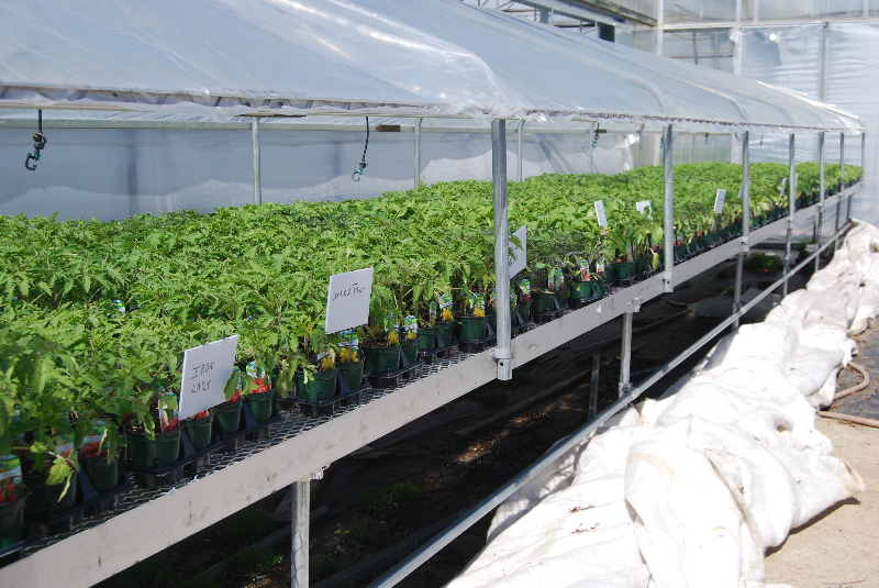 Garden Fusion | Certified Organic herb and vegetable plants