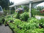 Organic vegetable plants