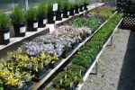 Colorful Perennials