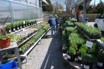 A wide selection of organic herbs