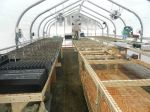 The complete view inside the warm and cozy greenhouse.