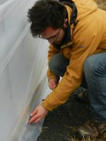 Marco helps secure the plastic to the base of the greenhouse