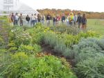 Tour of pollinator plots