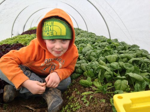 Winter spinach ready to pick by grandson Sawyer!