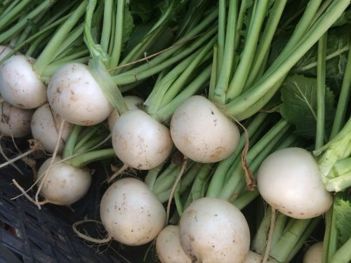 crisp white turnips