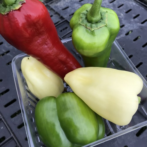 Mixed Sweet Green Peppers