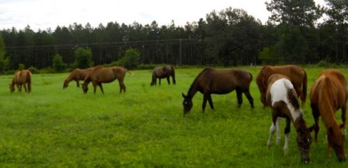 Some of our hypo-allergenic horses