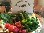 CSA Week 6: sweet corn, kale, eggplant, carrots, tomatillos, kale, jalapeños, onion, green pepper, chub cucumbers, potatoes and tomatoes.