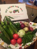 CSA Week 7: sweet corn, green peppers, onions, potatoes, tomatoes, cucumber, cabbage, green beans and zucchini