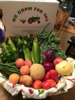 CSA Week 8: sweet corn, kale, cucumber, onion, jalapeños, green beans, heirloom tomatoes, roma tomatoes, red cabbage, sugar cube cantaloupe, and Colorado Peaches.